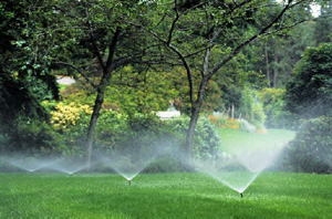 Lawn Watering Landscapes